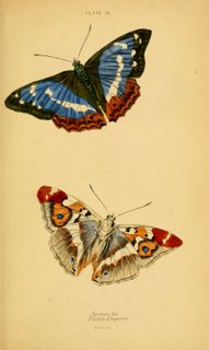 Butterflies Plate #21, Natural History of Britain