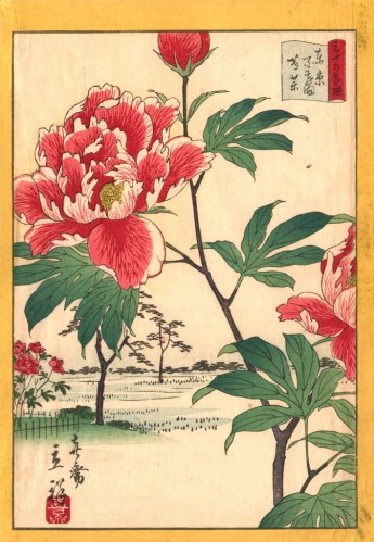 Peonies at Hyakken, #18 from the series 'Tōkyō Meisho Sanjurokkasen, Utagawa Shigenobu (1826 - 1869)