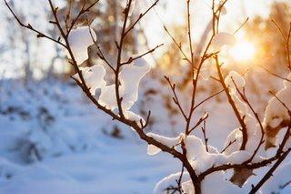 Image result for light winter