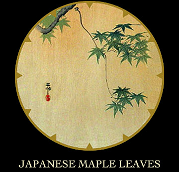 japanese maple leaves. Japanese Maple Leaves